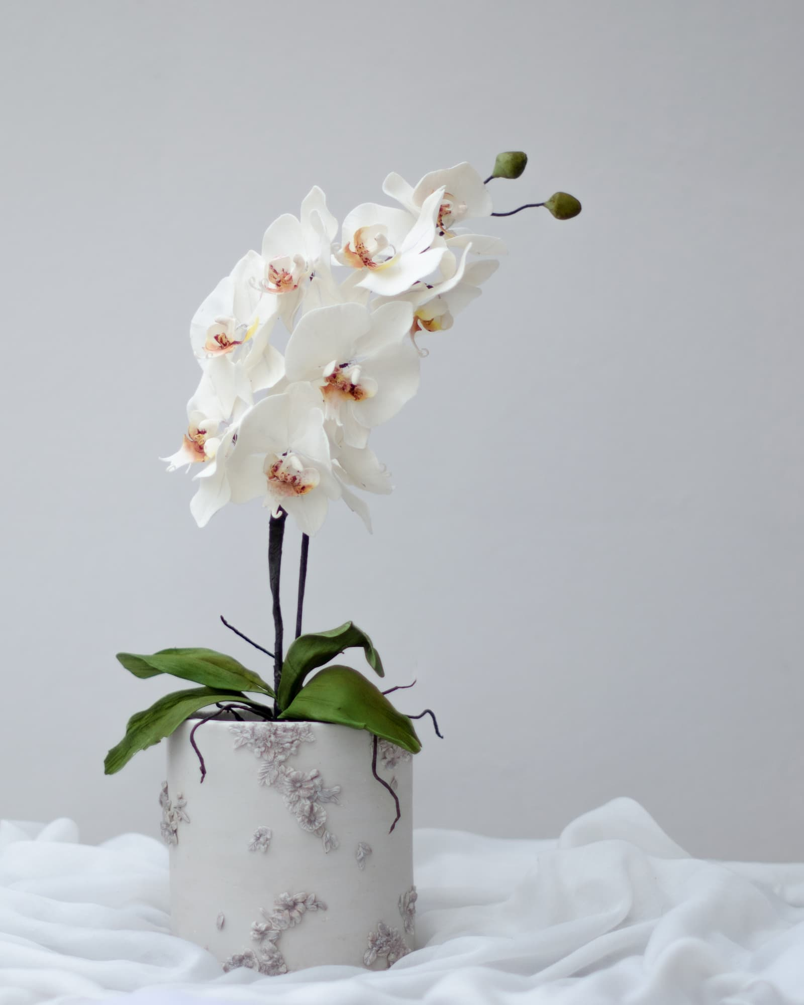 Roseraé Cakes Orchid Planter